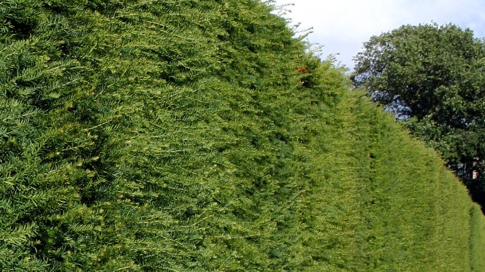 Sudbrooke mystery hedge cutter prompts police appeal