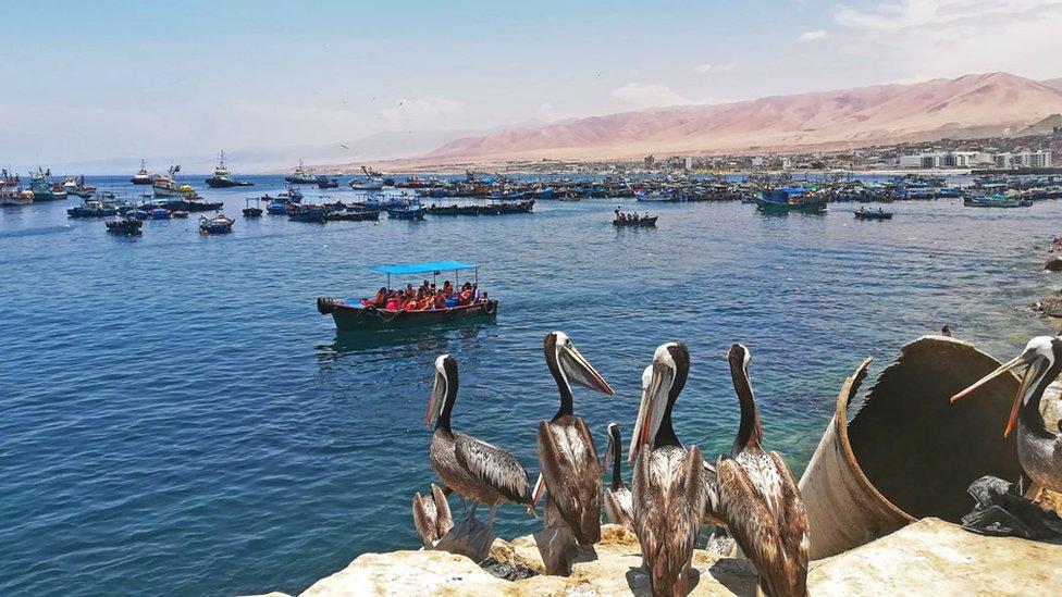 La actividad más turística en Ilo consiste en un paseo en bote por la bahía. (Foto: S. G.)