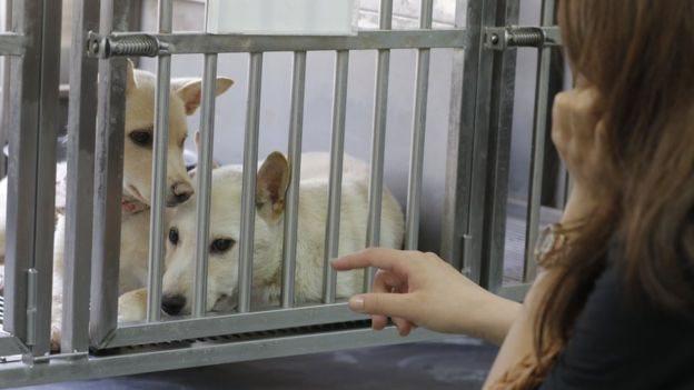 Perros en una jaula