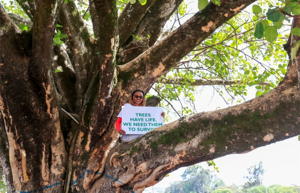 "A smiling woman sits in a tree bough holding a placard that reads ""Trees have life - we need them to survive""."