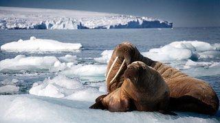 BBC News - Sir David Attenborough to present Blue Planet sequel