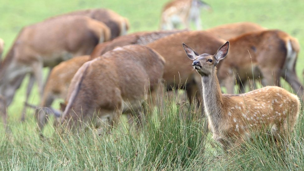 South Africa's Robben Island to cull 400 deer