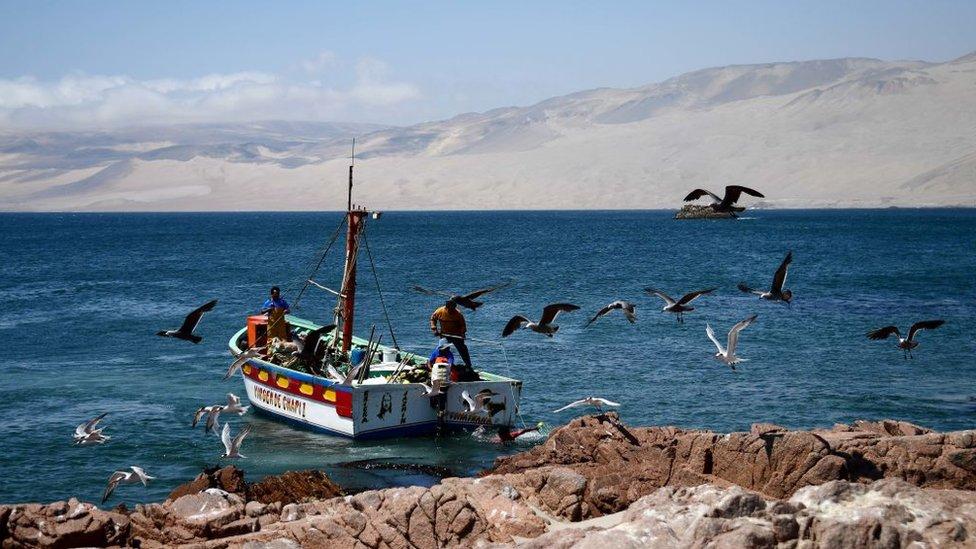 Pisco es una ciudad pesquera que se encuentra a 230 kilómetros al sur de Lima. (Franck Fife)