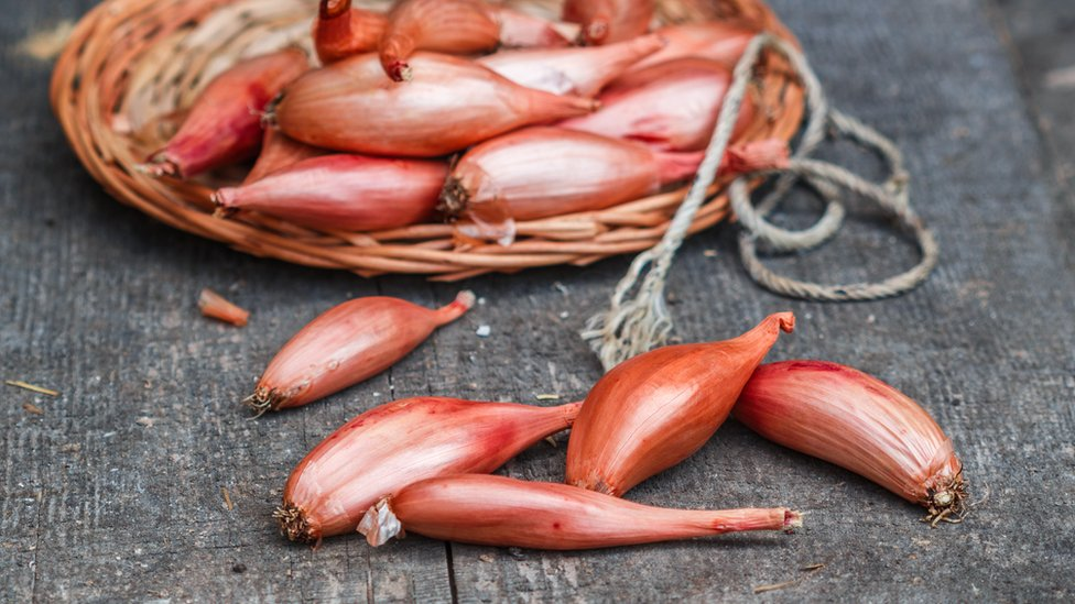 Persian shallot 'could help fight TB antibiotic resistance'