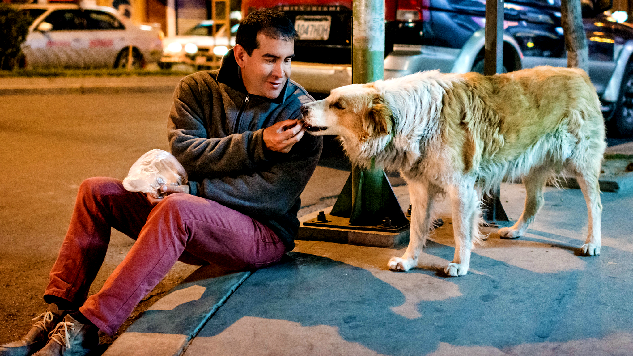 Like a dog with a bone: The Bolivian helping strays