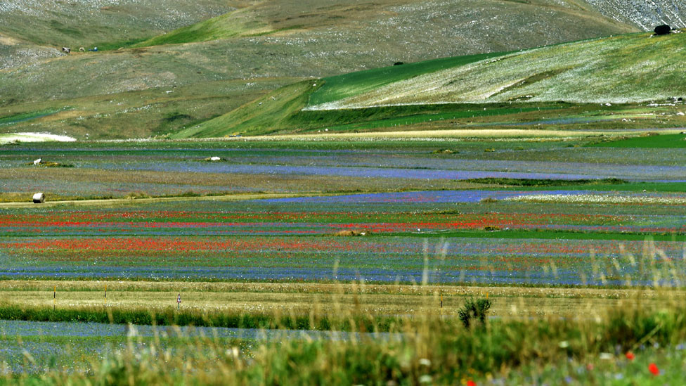Planicie de Piano Grande cubierta por franjas de flores