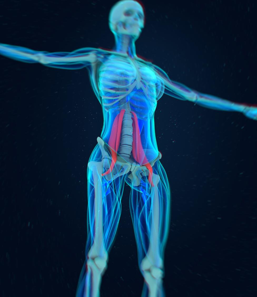 Cómo ejercitar el psoas, uno de los músculos más importantes | Tele 13