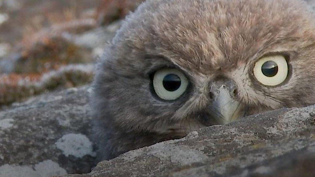 Essex little owls win wildlife photographer's affection