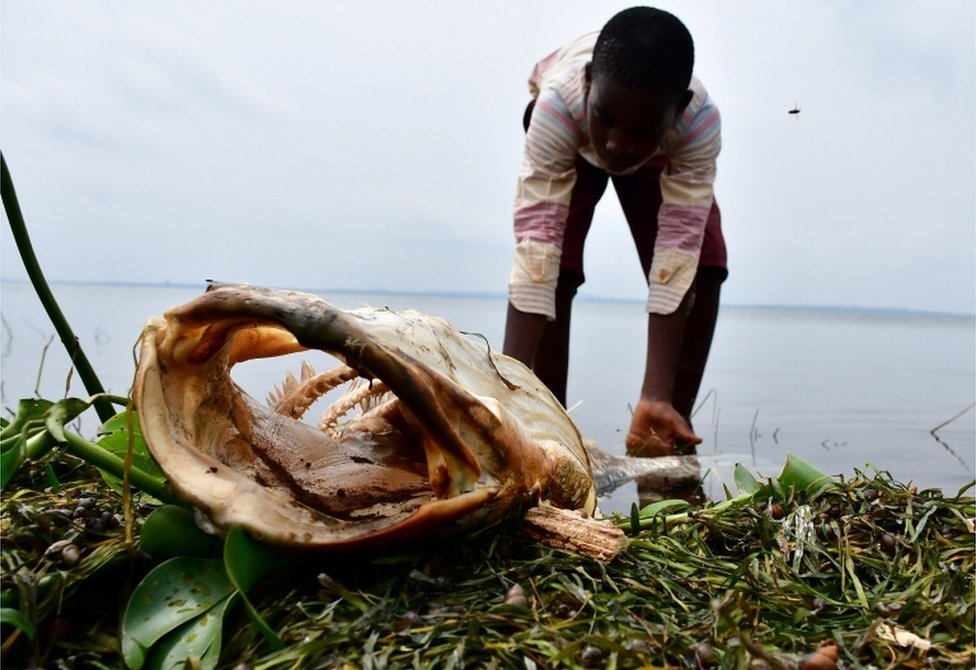 A boy looks at the fish that died and was swept ashore to Kigungu landing site in Entebbe, Uganda, on 12 January.