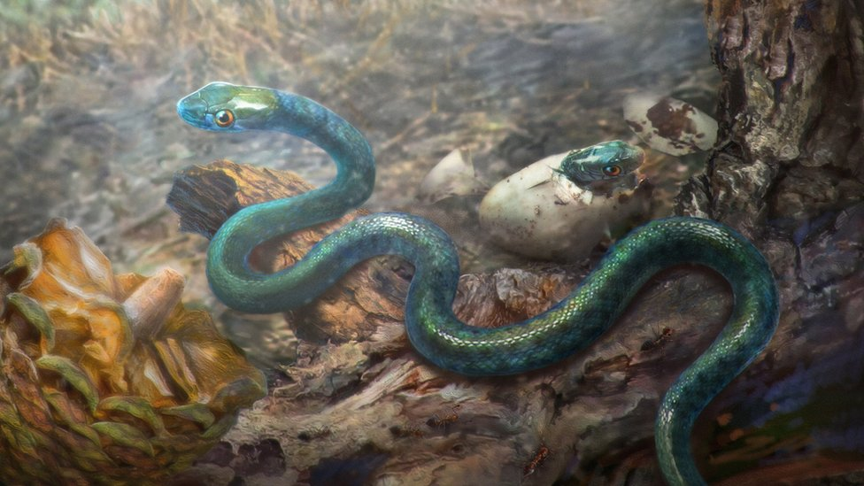 99 million-year-old snake discovered