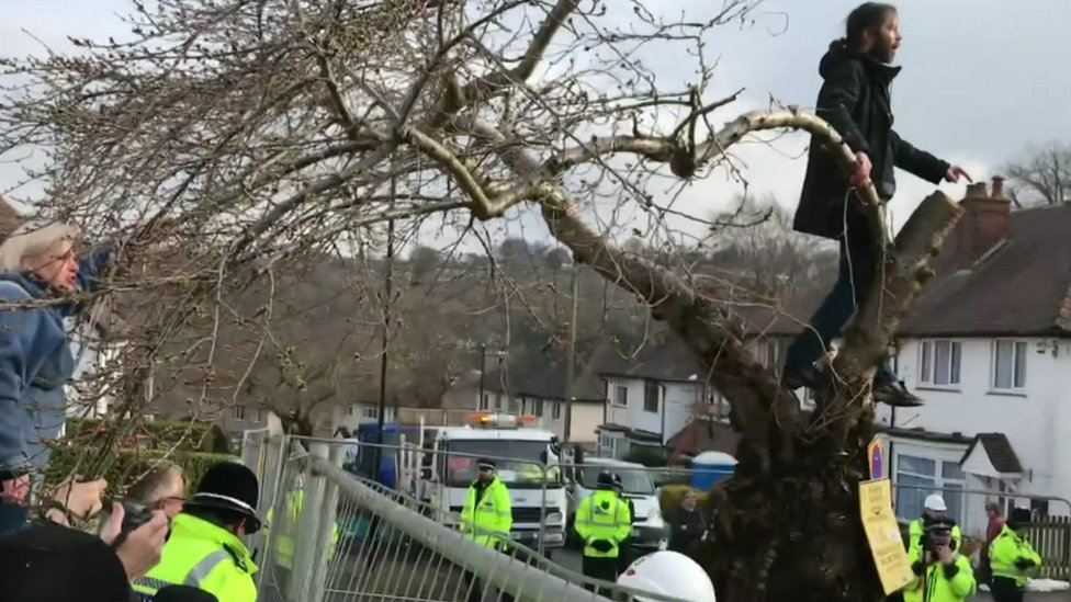 Anger over Sheffield's plan to fell healthy trees