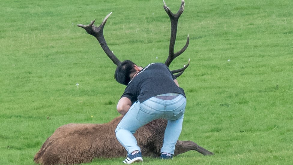 Warning over stag selfies with Wollaton Park deer