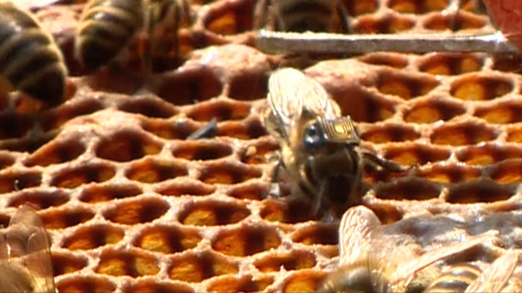 Bees 'go online' in Manchester