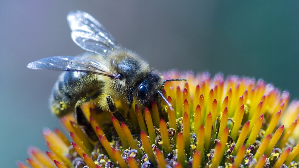 Woman dies after having bee-sting therapy