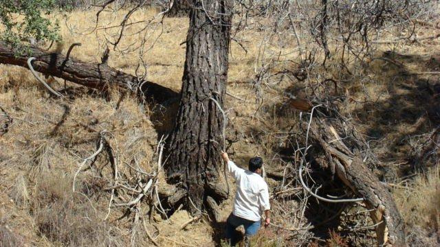 Tim Hernandez en el lugar del accidente del cañón Los Gatos (Foto: cortesía Tim Hernandez)