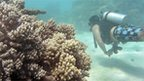 A driver in the Great Barrier Reef