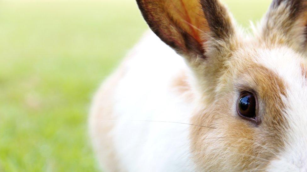Conejo.
