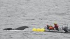 Crew attempting to free a whale that had become entangled in fishing gear
