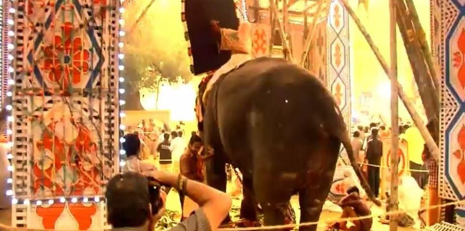 An elephant forced to stand amid a firework display