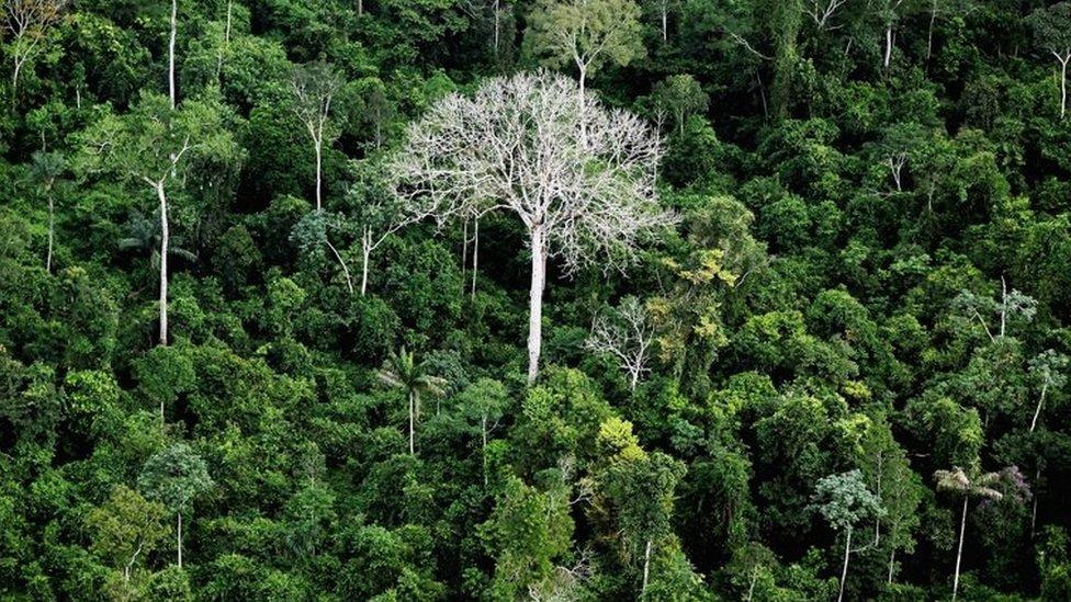 Brazil opens vast Amazon reserve to mining