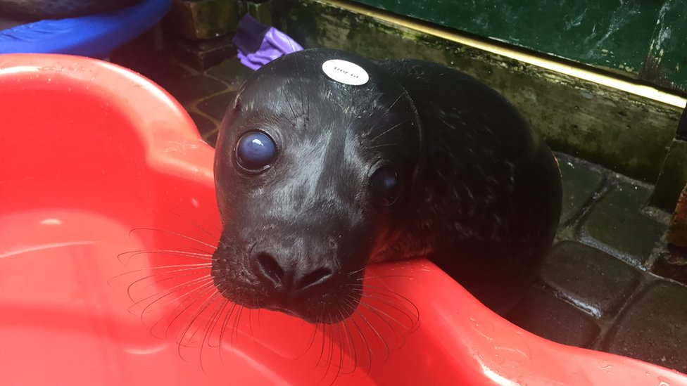 Seals say goodbye in County Down after beach release
