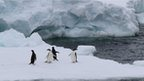 Four penguins on a large white ice berg. Choppy waters and another large ice berg in the background.
