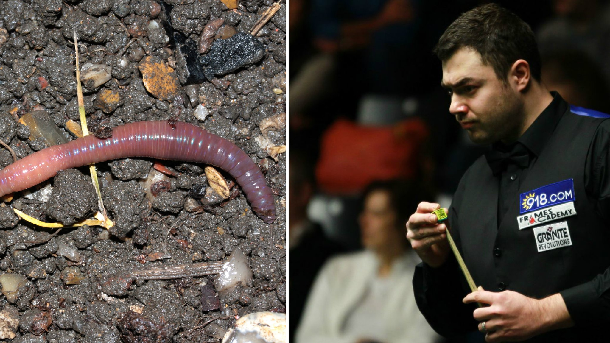 My thumb was huge - snooker player bitten by worm