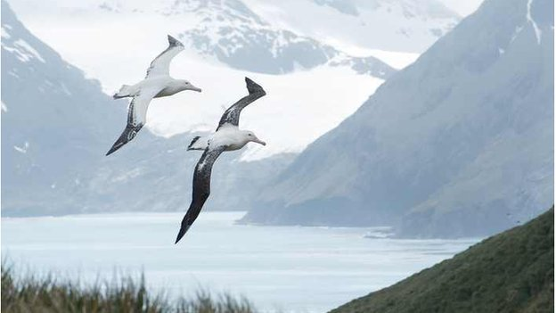 Albatrosses hit by fishing and climate