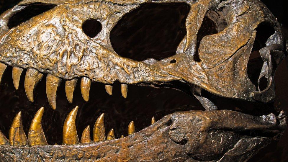_95207159_tyrannosaurus_rex_dinosaur_skull-spl.jpg