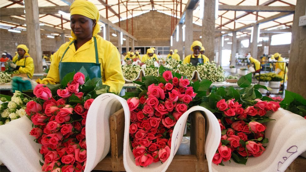 No bed of roses: The Kenyan flower pickers fighting sexual harassment