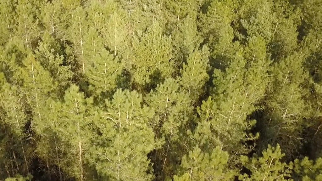 Plan to future-proof the ecology of Thetford Forest