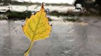 A yellow leaf stuck to a wet window pane