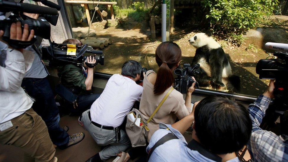 東京上野動物園內媒體包圍大熊貓真真拍攝(19/5/2017)