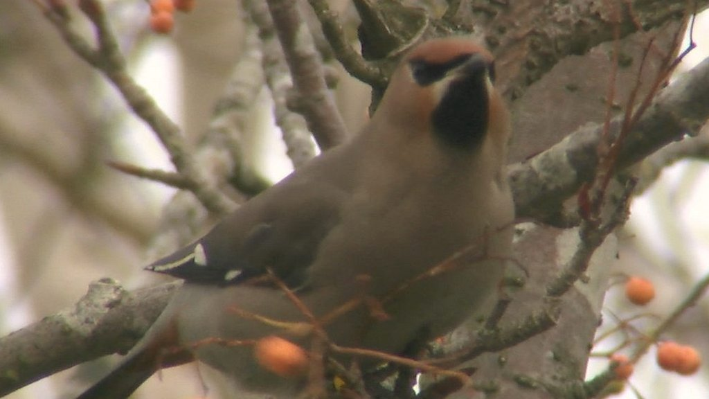Winter birds thrill Norfolk wildlife photographers
