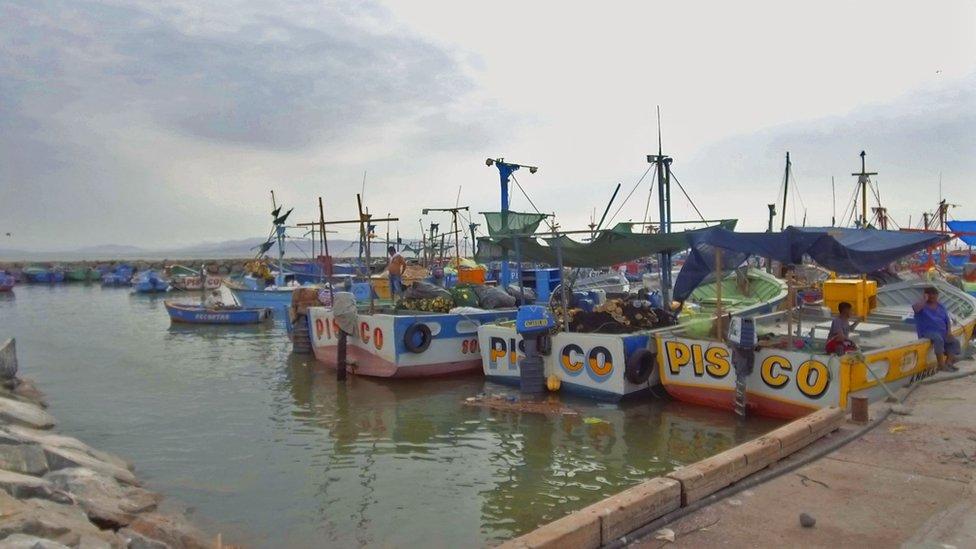 Los lunes, miércoles y viernes son los días en que los buzos artesanales van al puerto de Pisco. (Foto: V. M. Vásquez)