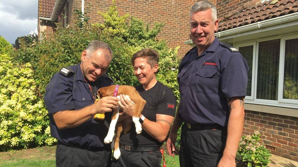 Puppy Holly gets VIP treatment after 999 rescue in Ashford