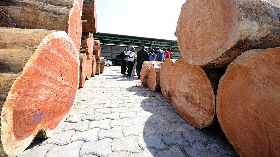 Au Gabon, de hauts responsables suspendus de leurs fonctions pour trafic de bois