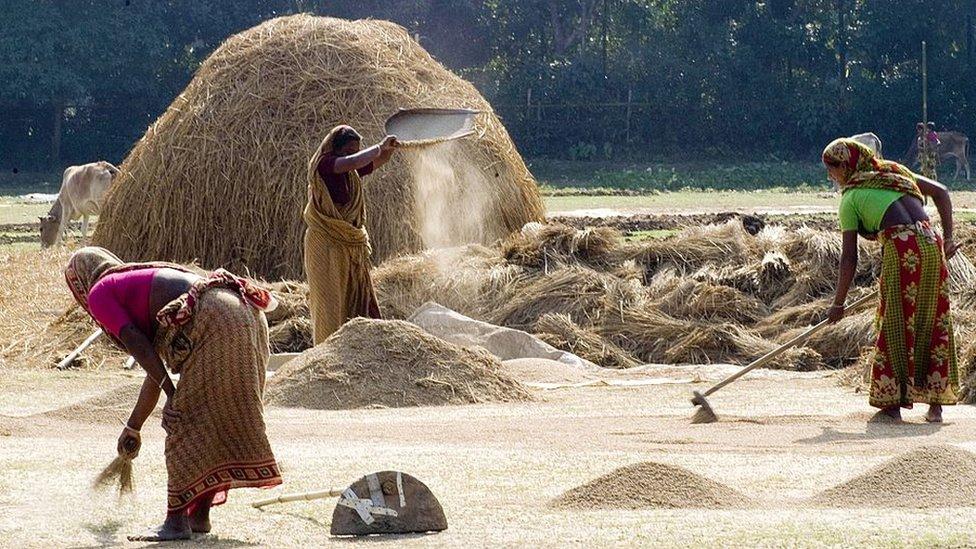 ধানের দাম: কৃষকদের এবার কিছুটা ক্ষতি হবেই, বলছেন কৃষিমন্ত্রী