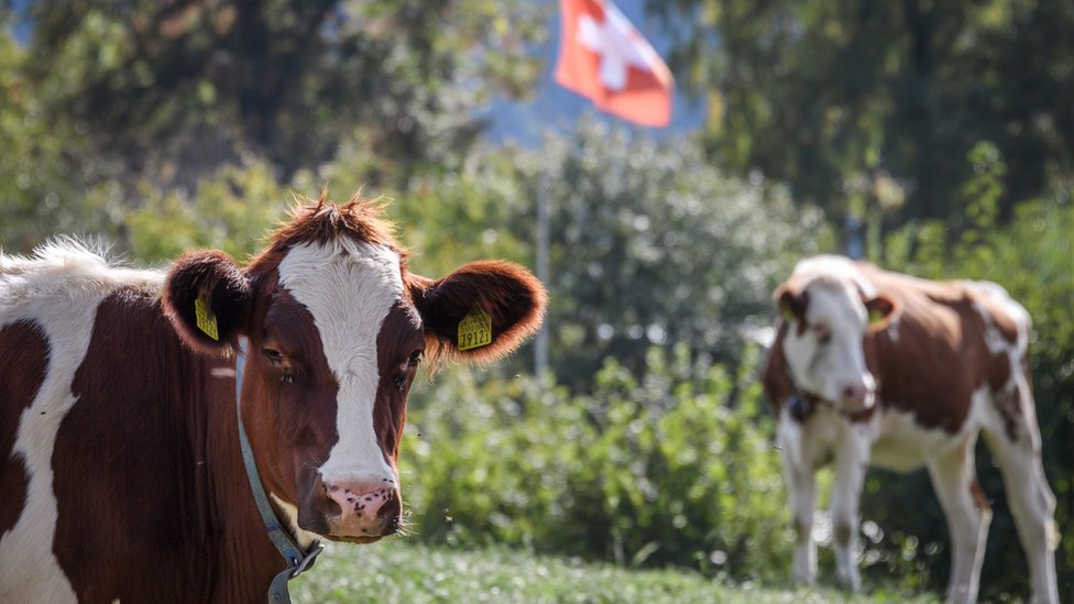 Swiss voters 'reject fair food plans'