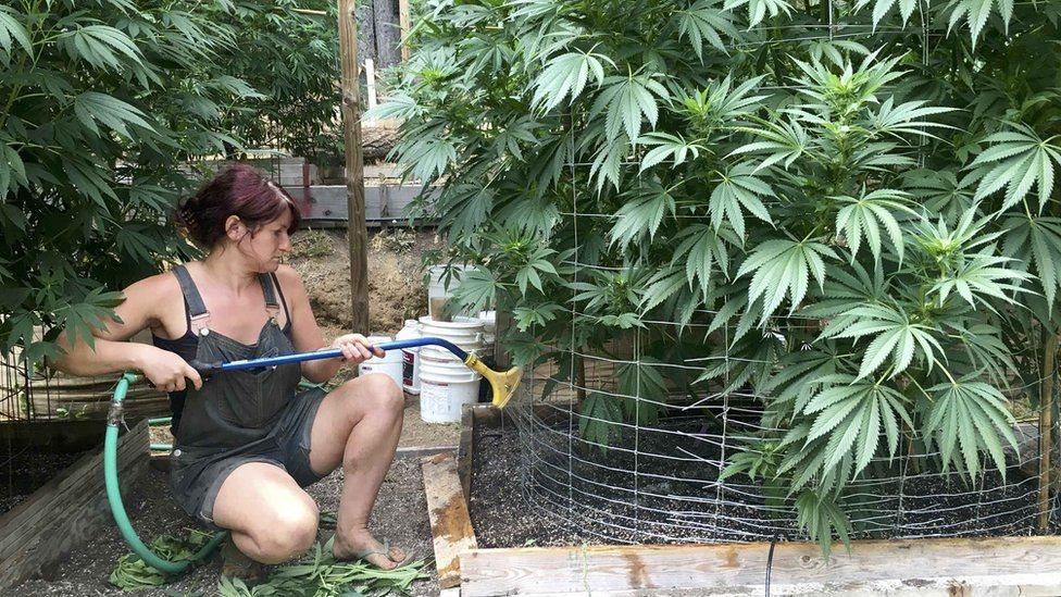 Algunos estados del país, como California, legalizaron el consumo recreativo de esta droga.