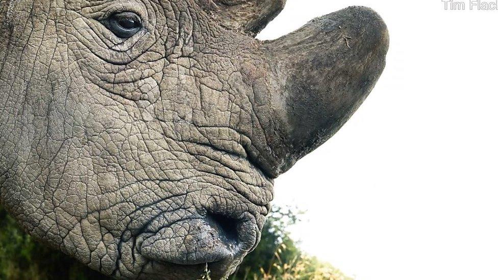Под угрозой исчезновения: портреты вымирающих животных