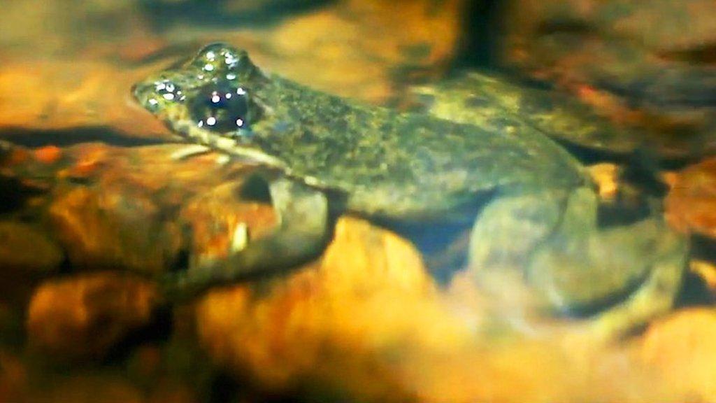 Togo slippery frog scientist wins award for conservation effort