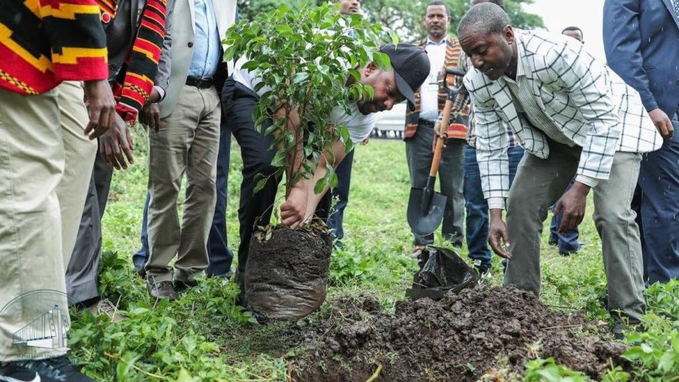 Image result for Ethiopia has reportedly  planted more than 200 million trees in a day.