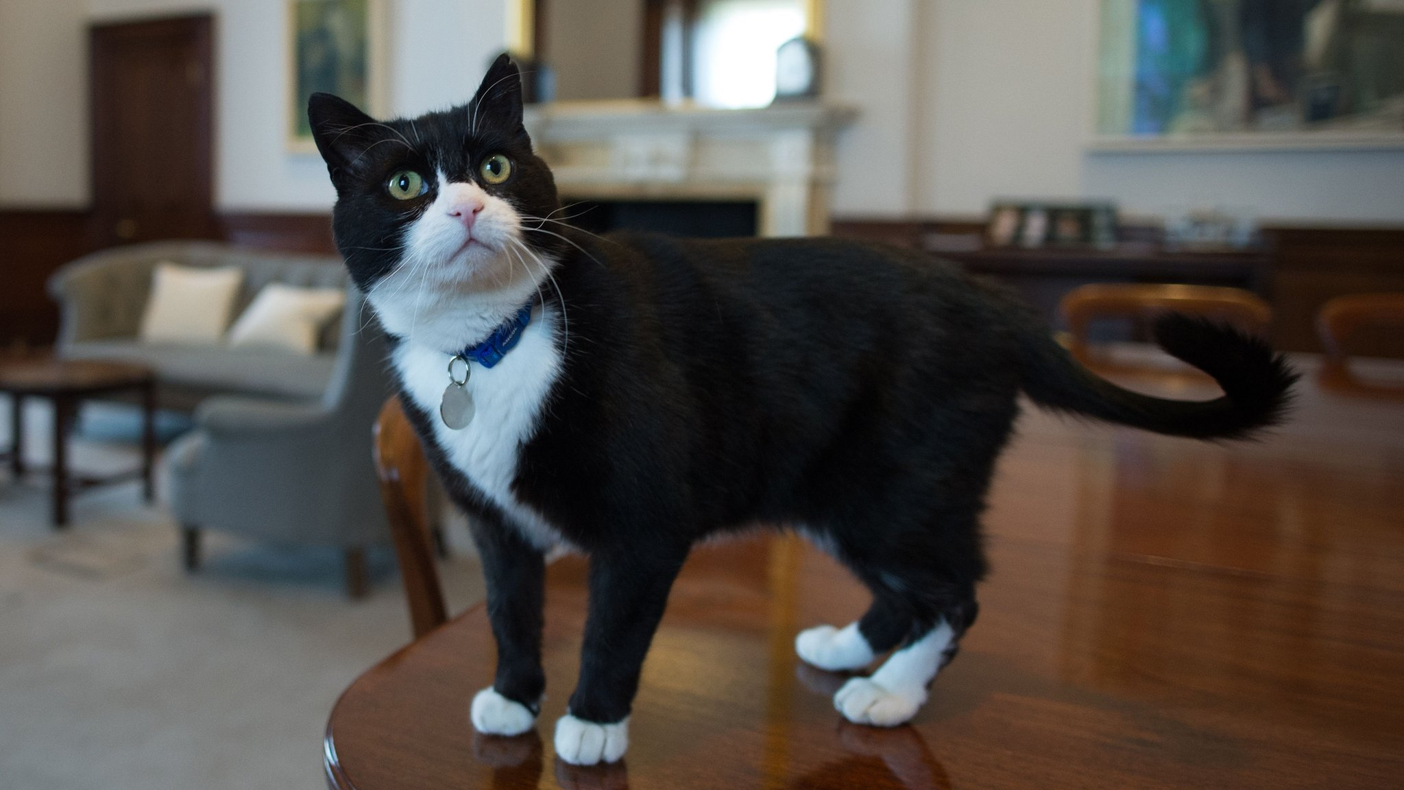 Palmerston The Stray Cat Is New Chief Mouser At Foreign Office
