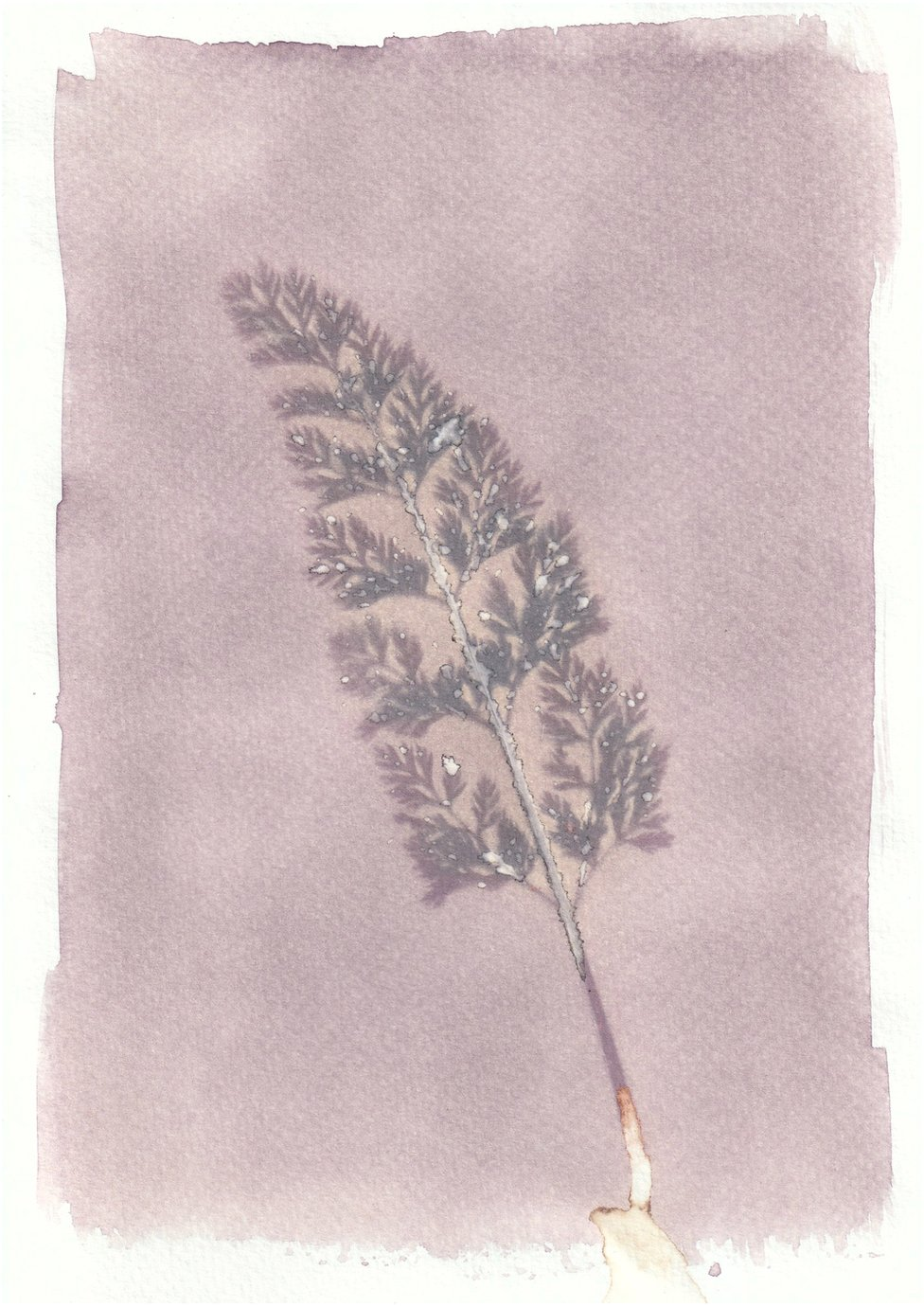 An anthotype print of a purple piece of plant foliage