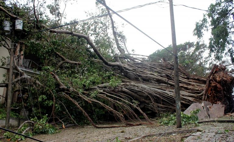 Un árbol desarraigado por la fuerza del huracán Irma en La Habana.