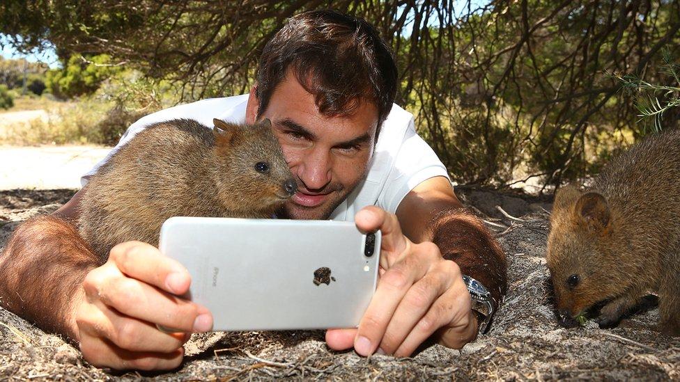 Roger Federer tomándose una foto con un quokka