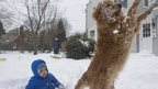 A dog jumps up to catch a snowball as a toddler sits in snow