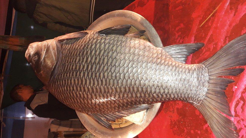 মৌলভীবাজারের শেরপুরে একটি কাতলা মাছের দাম লাখ টাকা