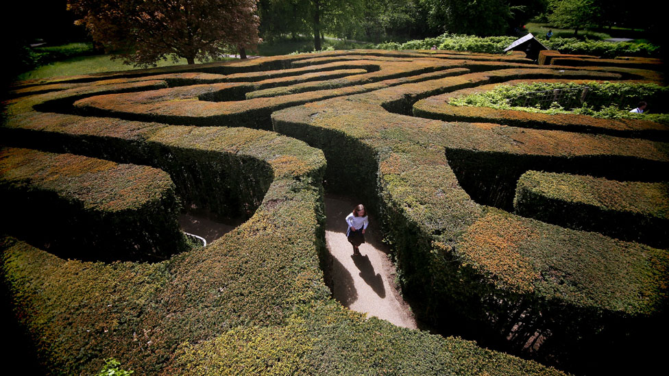 Someone in the Hampton Court Palace maze
